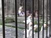 Испания. Барселона. Собор Святого Креста (внутренний двор)