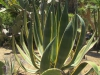 Сад Пинья де Роса