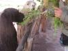 Зоопарк при сувенирном магазине